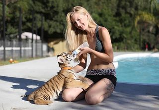 Photo - feeding tiger at pool